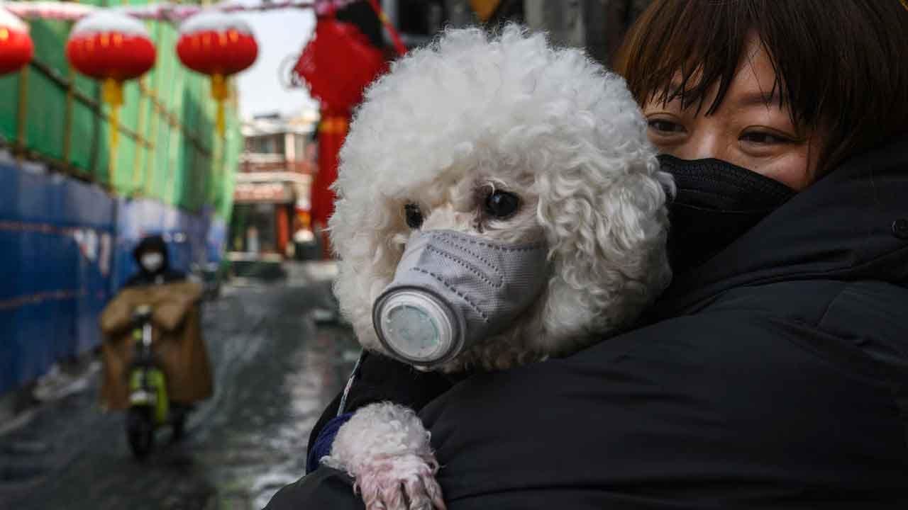 Patient's Dog Tests Positive For Coronavirus