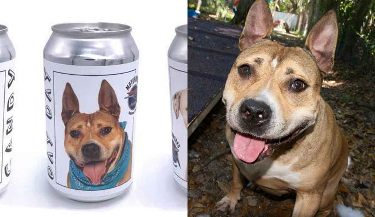 Minnesota Woman Recognizes Her Dog — Missing For 3 Years — On Florida Brewery Beer Can