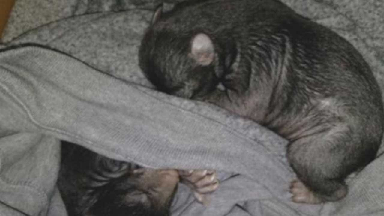 Box Of Bear Cubs Bewilders Man At North Carolina Home