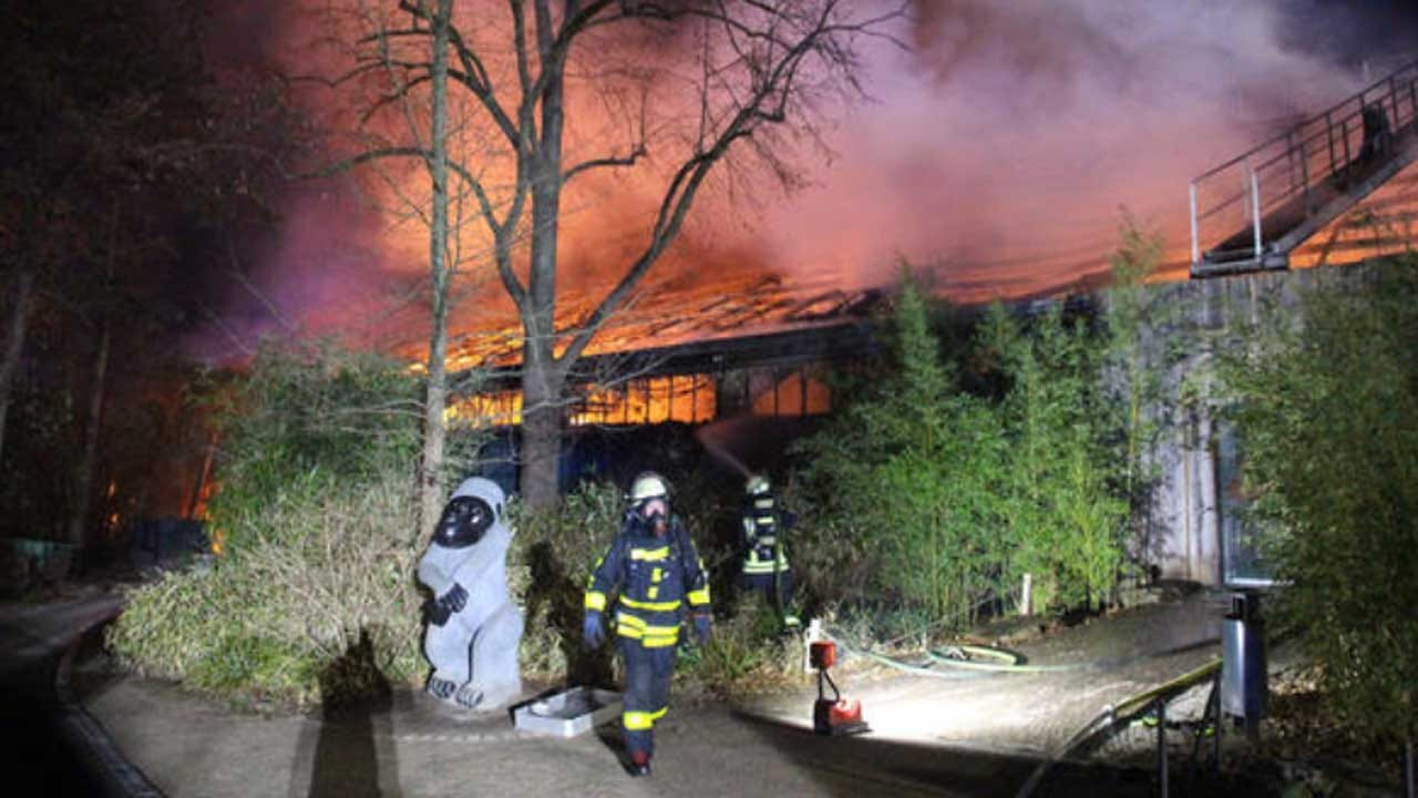 'Unfathomable Tragedy' As Fire Ravishes German Zoo's Ape House