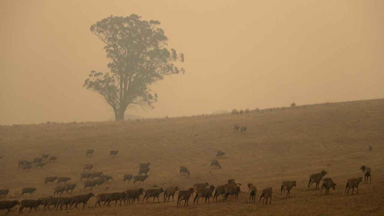 Firefighter Killed By Falling Tree In Australia