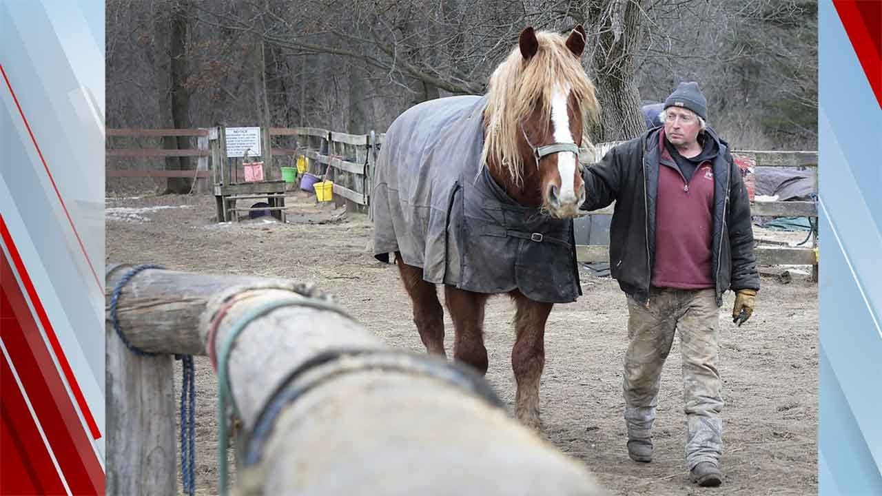 Hay Tainted By Toxic Beetles Kills 14 Horses In Wisconsin