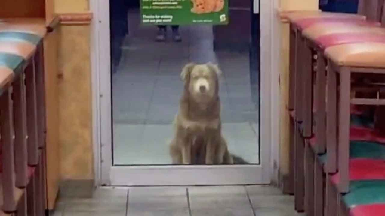 Stray Dog Who Shows Up To Local Subway For Food Every Night Becomes Internet Sensation