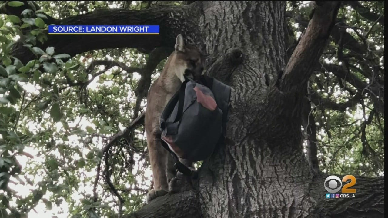 3-Year-Old Boy Recovering From Attack By California Cougar