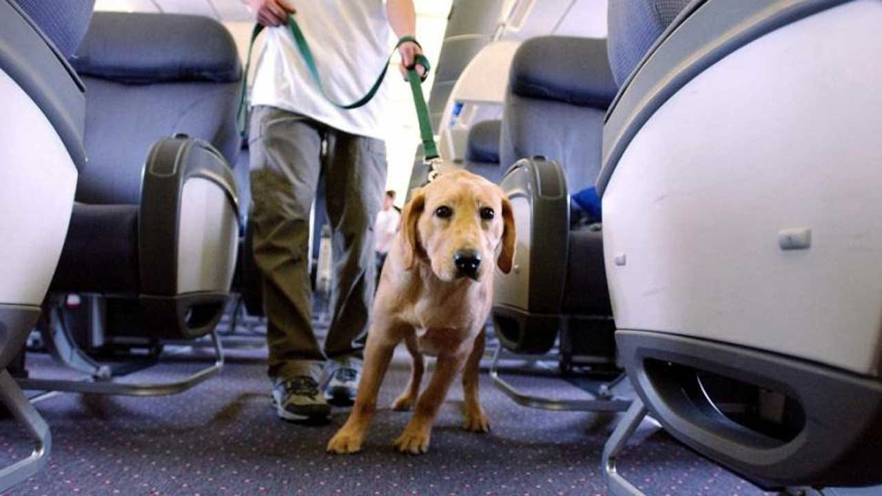 Government Could Let Airlines Ban Emotional Support Animals