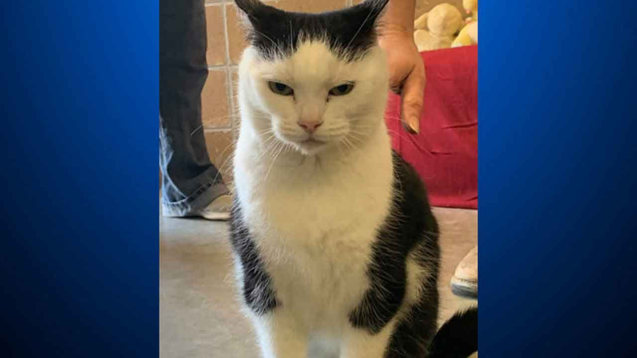 Animal Shelter Says 'World's Worst Cat' Is Up For Adoption
