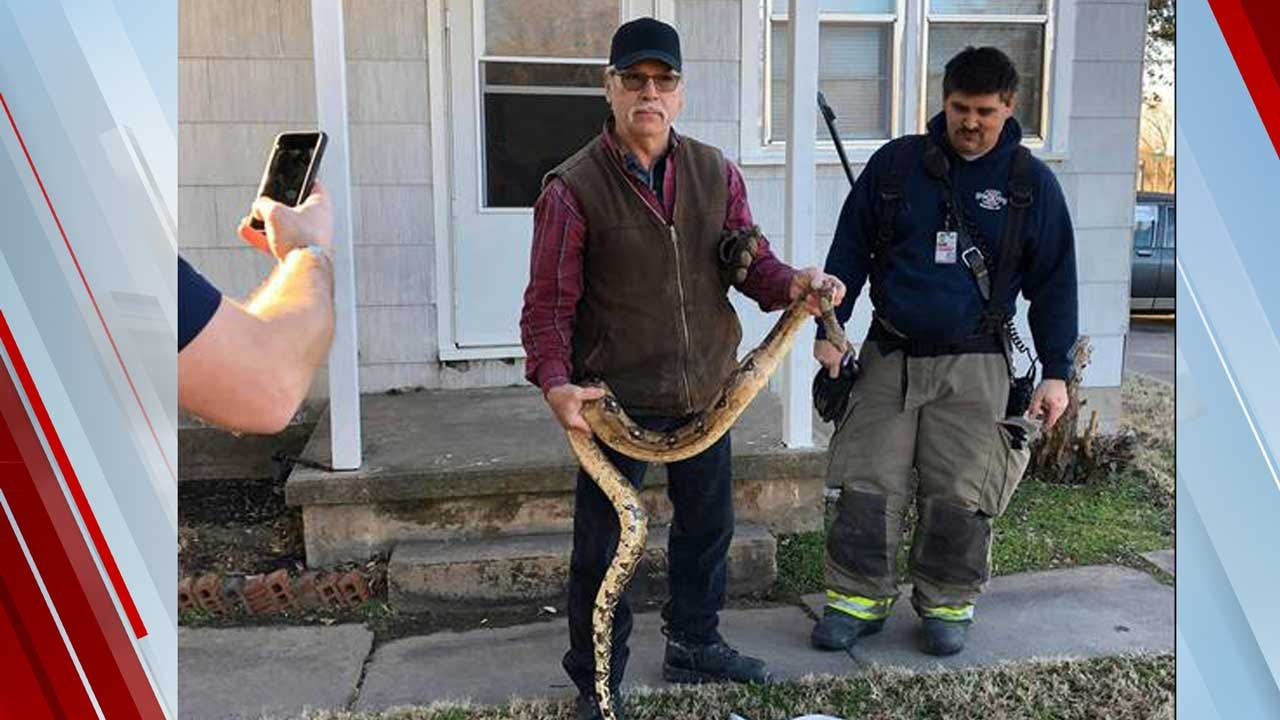 Kansas Residents Find Boa Constrictor In Living Room Couch