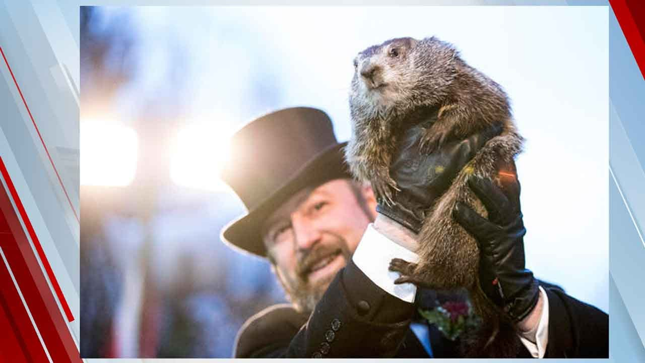 PETA Calls For Punxsutawney Phil To Retire: 'It's No Kind Of Life'
