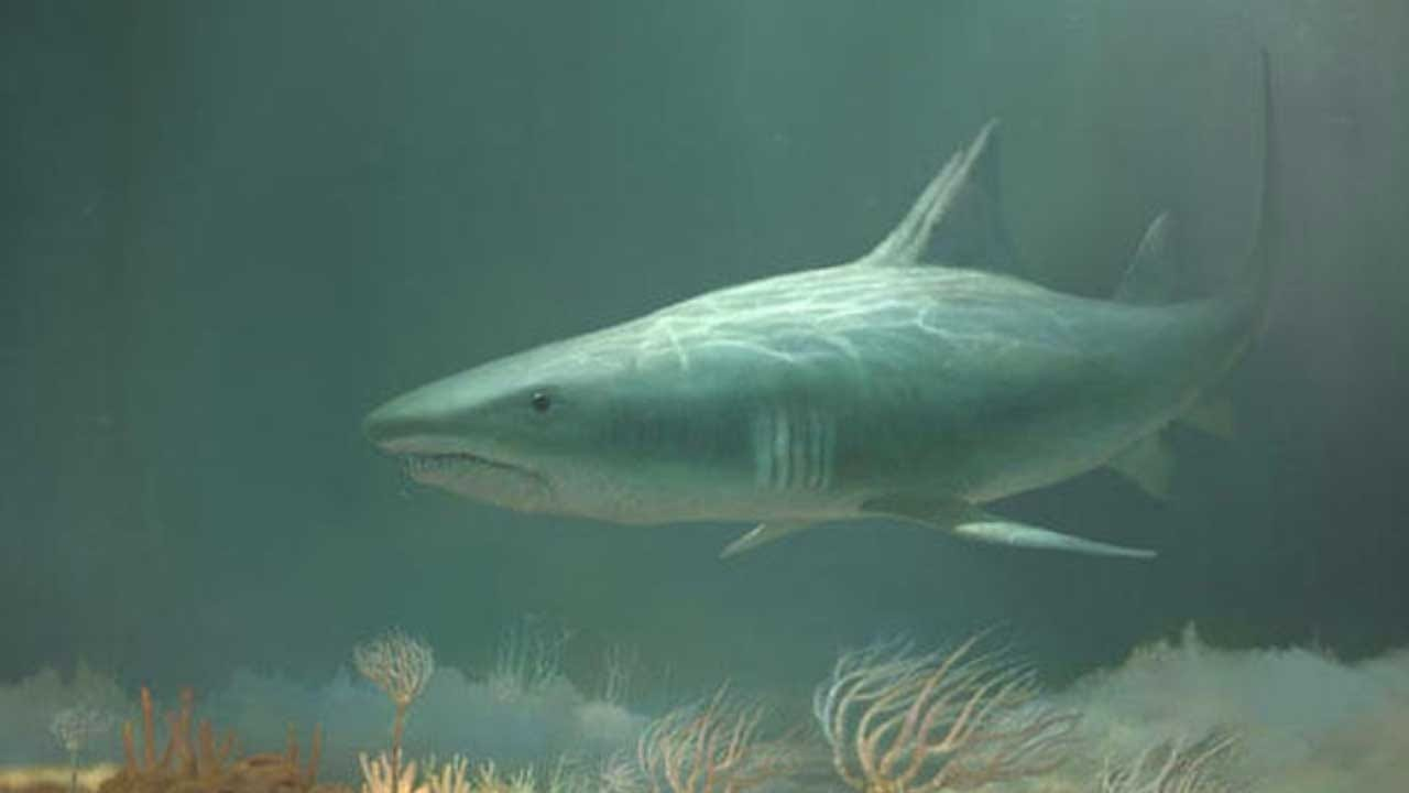 Scientists Found The Head Of A 330-Million-Year-Old Shark In A Kentucky Cave