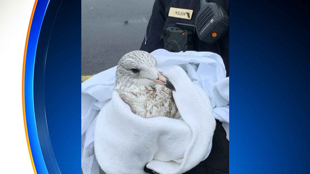 Police: Suspect Runs Over Seagulls After Luring Them With Popcorn