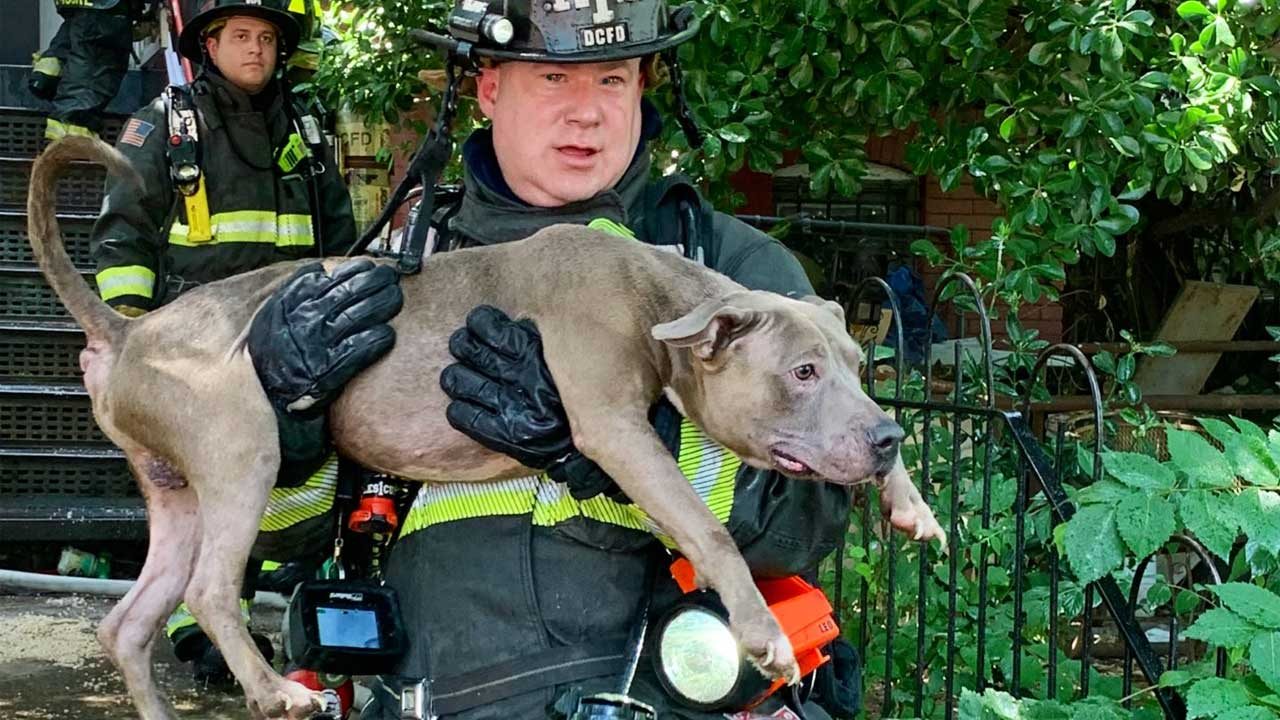 Video Shows Firefighters Reviving Dog After Rescuing It, 5 Others From Burning Home In DC