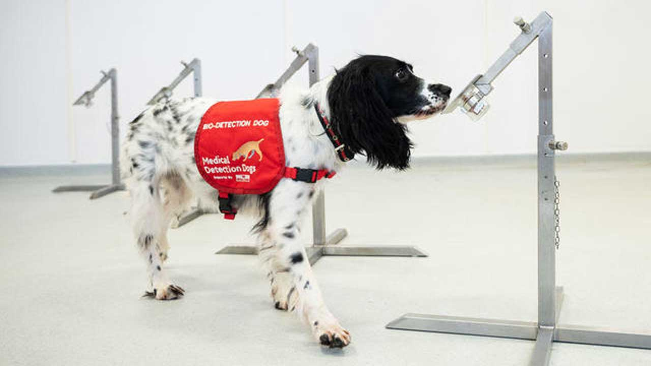 Miami Heat To Use Coronavirus-Sniffing Dogs To Screen Fans At Games