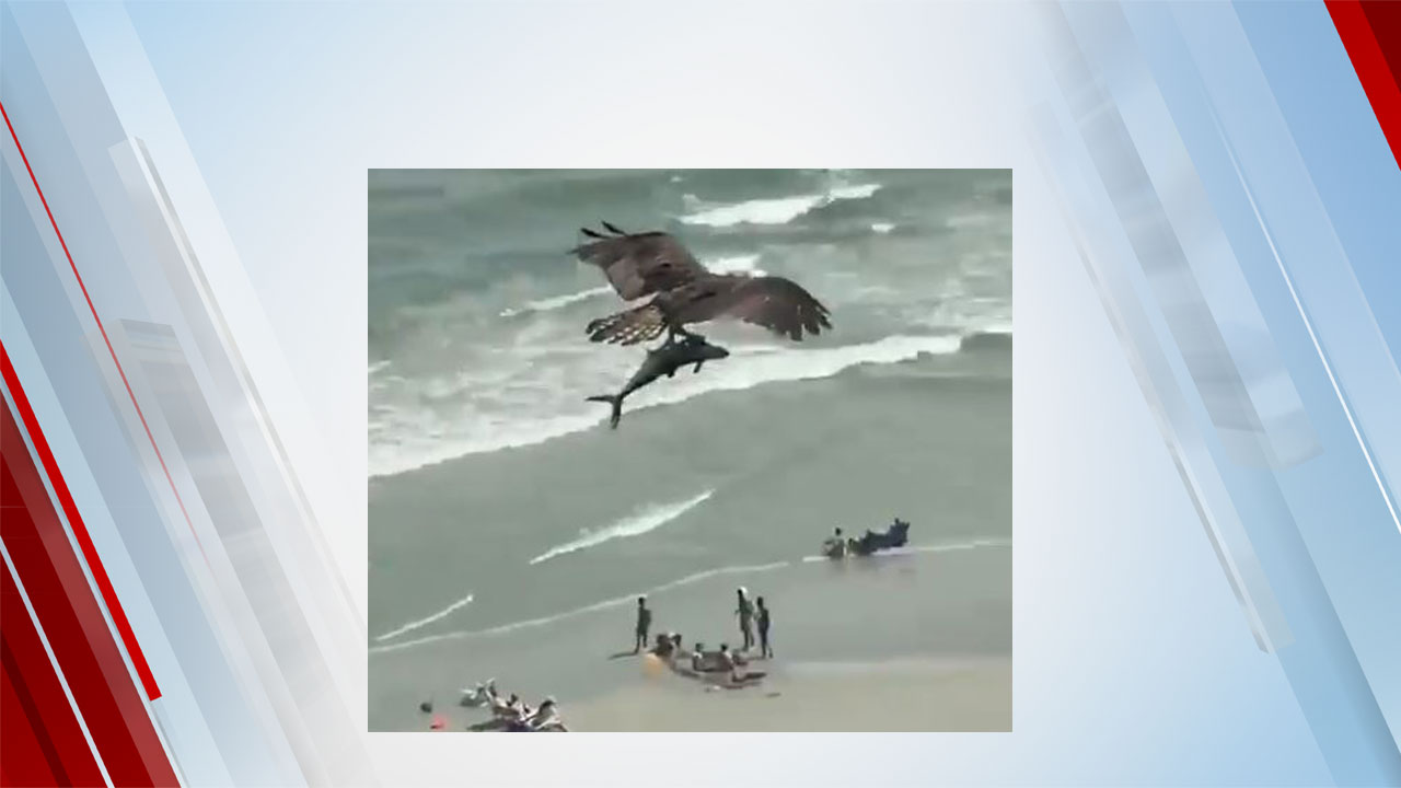 Viral Video Captures Bird Of Prey Carrying Shark-Like Fish At Myrtle Beach