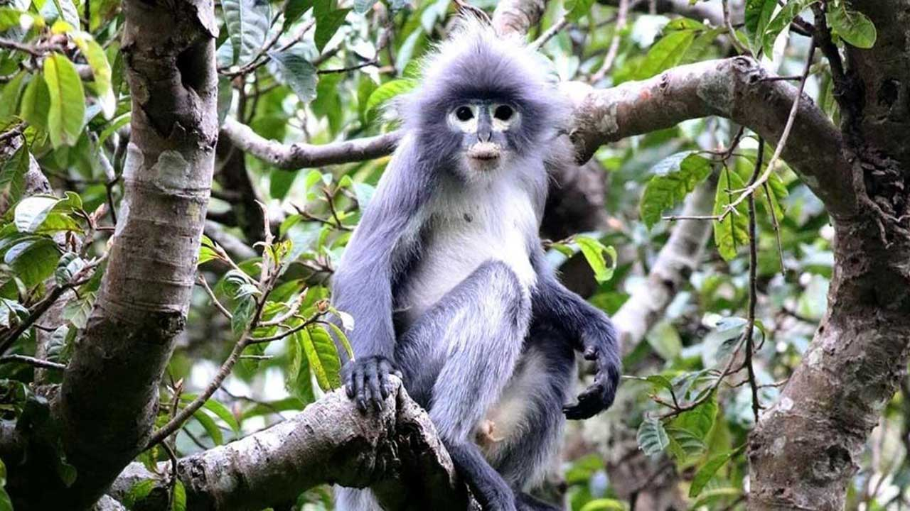 Scientists Just Discovered A New Species Of Monkey — But It Is Already Critically Endangered