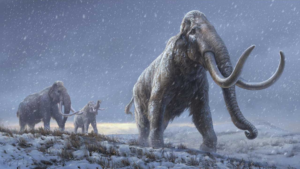 Researchers Recover Oldest DNA Ever Found — From A Mammoth More Than 1 Million Years Old